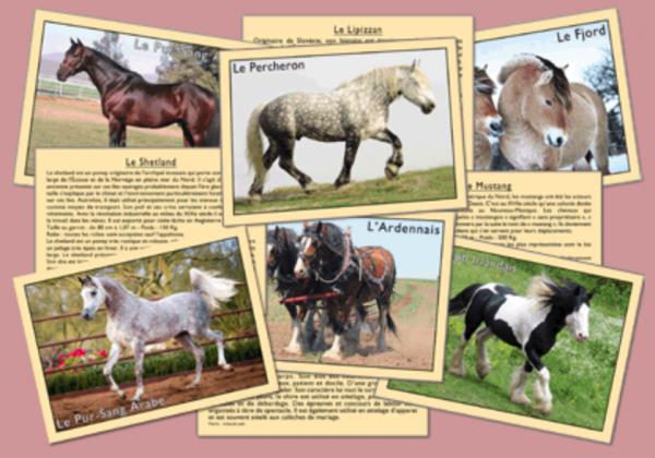 J'apprends à reconnaître les chevaux