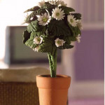 POT DE MARGUERITES BLANCHES