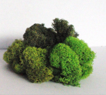 LICHEN NATUREL 3 TONS VERTS